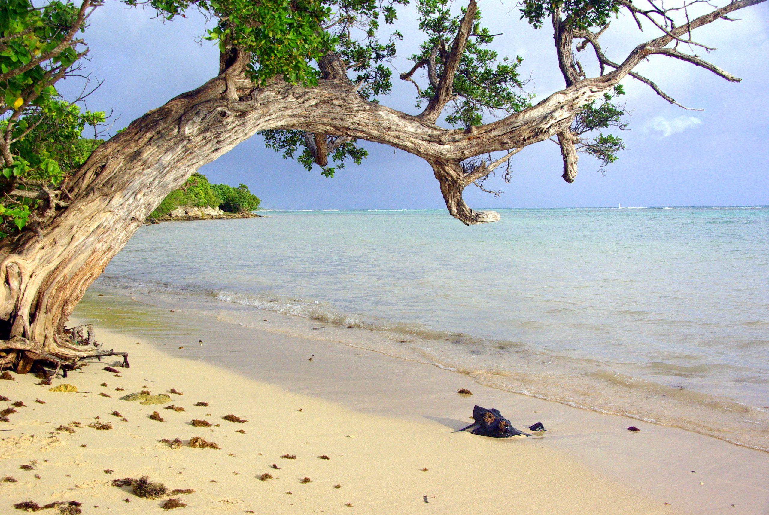 """< img src=""""guadeloupe-grande-ance.jpg"""" alt=""""Voyage en Guadeloupe plage"""" />"""