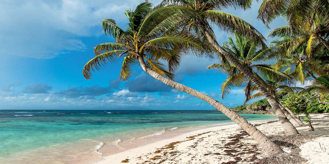 "< img src=""guadeloupe-basse-terre.jpg"" alt=""Voyage en Guadeloupe Basse terre"" />"